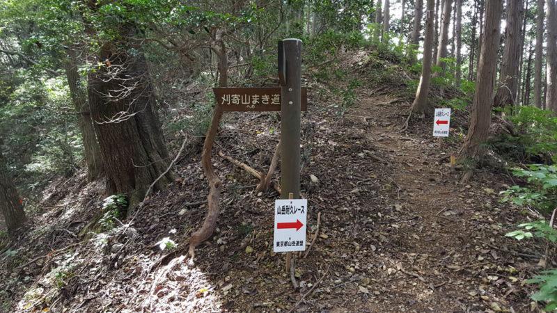 刈寄山前のまき道
